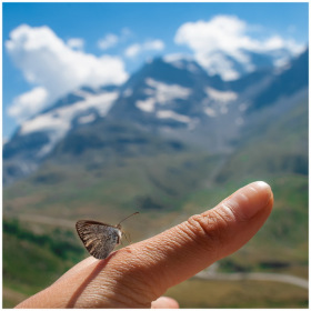 butterfly on a finger with the mountains background